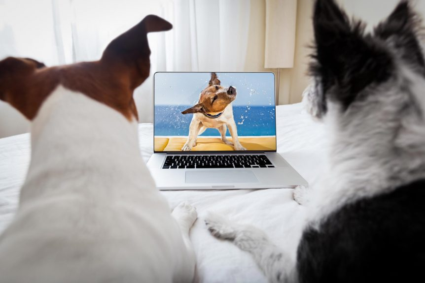 Dogs surfing the net